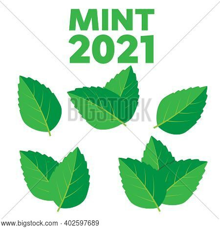 Fresh Green Tea Sprig And Mint Leaves. Mint Leaves Vector Logo