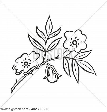 Stylized Branch Of Wild Rose. Rose Hip, Black And White Floral Ornament, Flower Buds, Leaves, Thorns