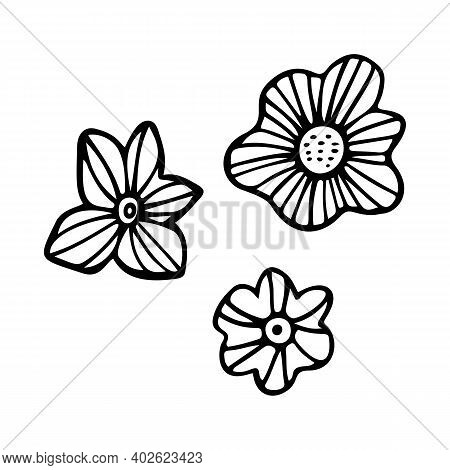 Tropical Flower Outline. Exotic Line Art Vector Illustration Isolated On White Background. Tropical