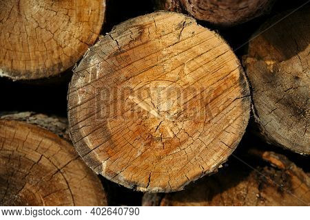 The Texture Of The Coniferous Forest Is Folded, Felling Of Trees, Firewood