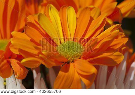 Orange Flowers Brighten The Day