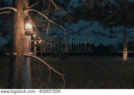 3d Rendering Of Close-up Shot Of Forest At Night With Hanging Lighten Storm Lantern