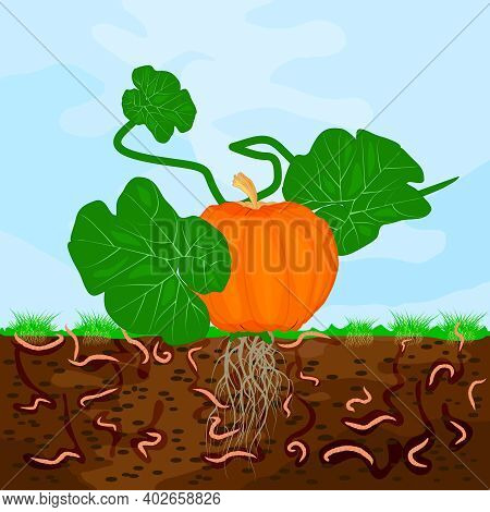 Ground Cutaway With Pumpkin And Earthworm. Earthworms In Garden Soil. Composting Process With Organi