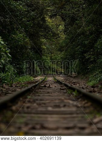 Railway Train Tracks In Green Jungle Rainforest Nature Landscape Hidroelectrica To Aguas Calientes M