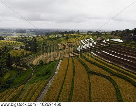 Aerial Panorama Of Rural Countryside Jatiluwih Rice Terraces Paddy Fields Farming Agriculture In Tab