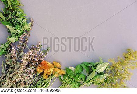 Healing Herbs On A Table. Mint, Oregano, Raspberry Leaves, Calendula Flowers And St. John's Wort For