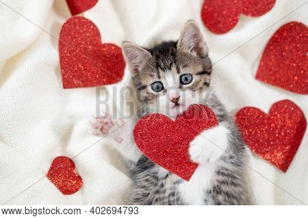 Valentines Day Cat. Small Striped Kitten Playing With Red Hearts On Light White Blanket On Bed, Look