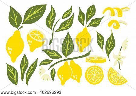 Lemon Set. Exotic Tropical Yellow Citrus Fresh Fruit Collection, Whole Juicy Lemons With Green Leave