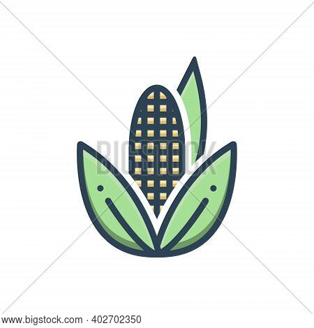 Color Illustration Icon For Corn Maize Agricultural Nutrition Sweetcorn Popcorncorn Maize Agricultur