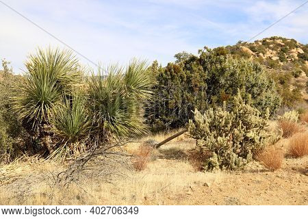 Chaparral Shrubs Besides Yucca And Cacti Plants Taken On A Sandy Plain At A High Desert Plateau In T