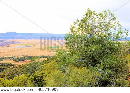 Pinyon Pine Trees Besides Chaparral Plants On A Field Overlooking Grasslands Taken At The Rural Sout