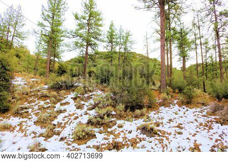 Alpine Hillside Meadow Covered With Snow Surrounded By A Temperate Pine Forest Taken On A Mountainou