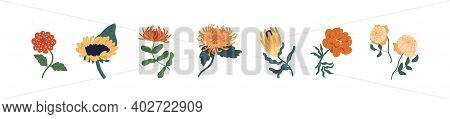 Set Of Fall Garden Flowers Isolated On White Background. Gorgeous Autumn Floral Plants Of Zinnia, Su