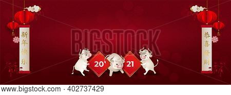 Chinese New Year 2021. White Oxes. Three Bulls Holding A Sign 2021. Lanterns, Flowers, Red Backgroun