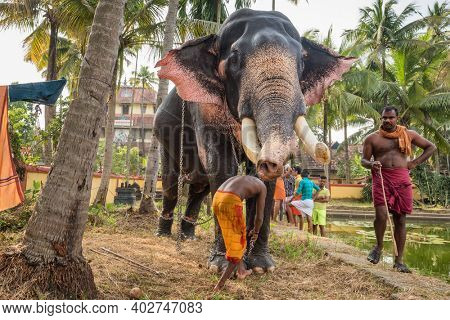 Fort Kochi, India - November 25, 2019: Unidentified indian men standing near by temple elephant in Cochin, Kerala state, India