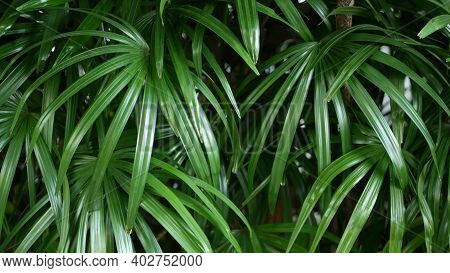Blurred Close Up, Bright Juicy Exotic Tropical Jungle Leaves Texture Backdrop, Copyspace. Lush Folia