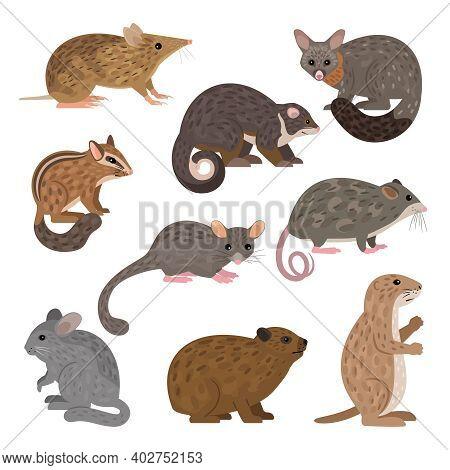 African Carnivores Animals. Cartoon Image Of Wildlife Creatures, Set Of Resident Of Zoo, Vector Illu