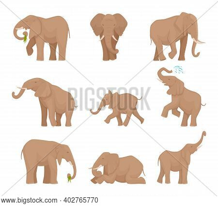 African Large Elephants. Big Wild Elephants Exact Vector Pictures Set. Illustration Elephant Africa,
