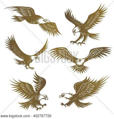 Eagles Stylized. Flying Wild Freedom Birds Hawk Recent Vector Emblems. Illustration Freedom Eagle An