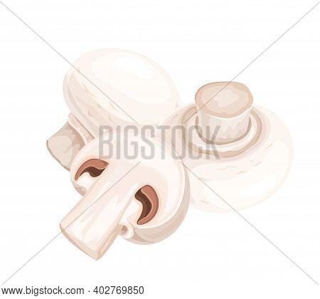 Champignon Edible Mushrooms Vector Illustration. Fresh Whole And Slice Edible Mushrooms Isolated On