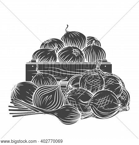 Onion, Leek Glyph Monochrome Vector Illustration In Retro Sketch Style For Ad Farm Products Store. P