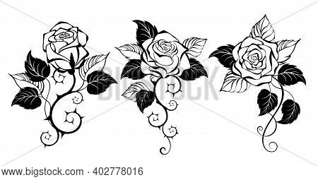Three, Artistically Drawn, Contour, Black, Prickly, Blooming Roses With Black Leaves On White Backgr