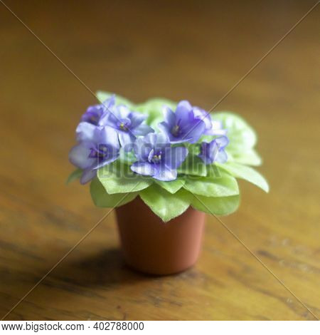 Violet Saintpaulias Flowers Commonly Known As African Violets Parma Violets Close Up Isolated Colore