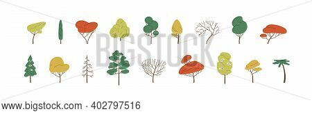 Set Of Deciduous And Evergreen Forest Plants. Botanical Collection Of Bare Trees And Ones With Leave
