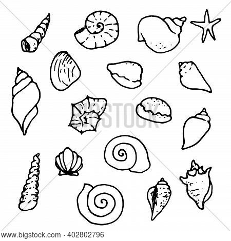 Sea Shell, Starfish, Seashell, Nautilus Sea Fauna Ocean Aquatic Underwater Uncolored Vector Set. Han