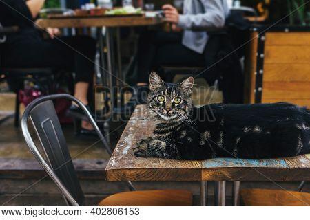 Cute Grey Cat Lying On A Table In A Street Cafe In Istanbul, Turkey. Tabby Grey Cat.