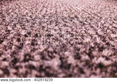 Background Fleecy Carpet Beige With Black Color, Background Close Up