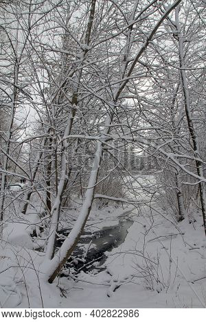 The Winter Landscape With Trees And Creek