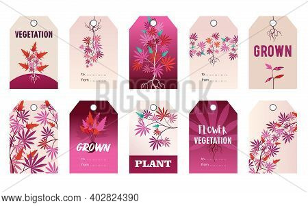 Promotional Pink Tag Designs With Hemp Plant. Colorful Cannabis Leaves, Roots, Bush With Text On Viv