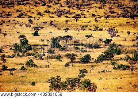 Savanna Plain With Dispersed Trees In Kenya View From Above