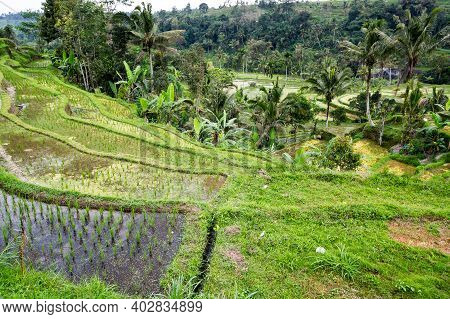 View Of The Jatiluwih Rice Terraces On Bali Island, Indonesia