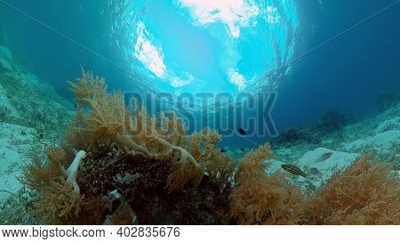 Sealife, Diving Near A Coral Reef. Beautiful Colorful Tropical Fish On The Lively Coral Reefs Underw