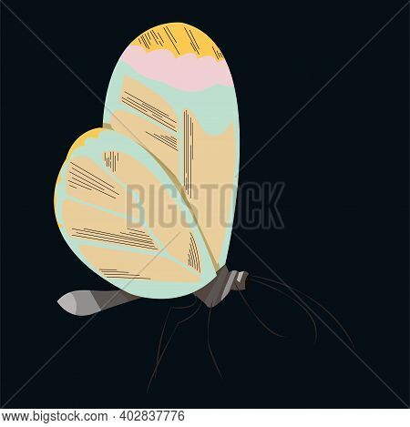 Abstract Butterfly With Strange Colored Wings On A Dark Blue Background. Vector Flat Illustration
