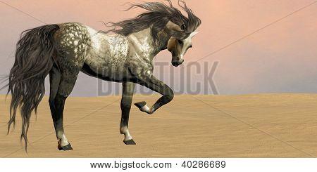 Desert Arabian Horse