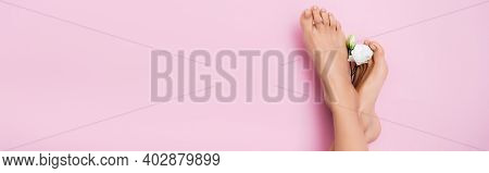Top View Of White Eustoma Flower Near Female Feet With Shiny Pedicure On Pink Background, Banner
