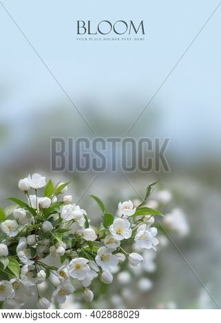 Spring bloom on trees  with copy space