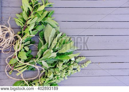 Healing Herbs Grown In A Garden. Peppermint, Cat Mint And Melissa On A Grey Wooden Table. Alternativ