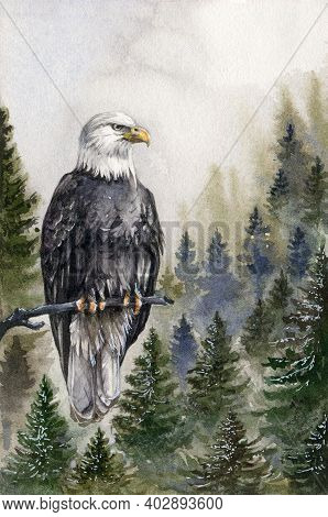 Bald Eagle Watrecolor Illustration. Hand Drawn America Predator Bird On The Tree Branch In The Mount