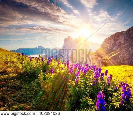 Magical view of the Odle mountain range and Furchetta peak, Val Gardena. Location Dolomiti, Puez-Geisler National Park, Seceda peak, Trentino Alto Adige, Italy, Europe. Discover the beauty of earth.