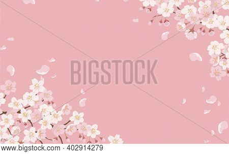 Floral Background With Cherry Blossoms In Full Bloom On A Pink Background. Vector Illustration With