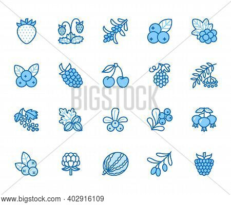 Forest Berries Flat Line Icons - Blueberry, Cranberry, Raspberry, Strawberry, Cherry, Rowan. Waterme