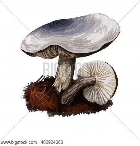 Tricholoma Atrosquamosume Dark-scaled Knight, Edible Gilled Mushroom Closeup Digital Art Illustratio