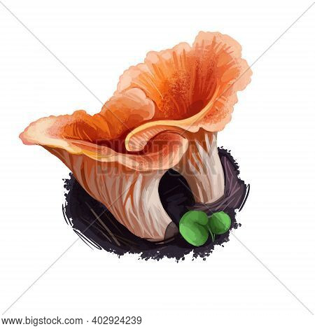 Turbinellus Floccosus Shaggy, Scaly, Or Woolly Chanterelle, Cantharelloid Mushroom Of The Family Gom