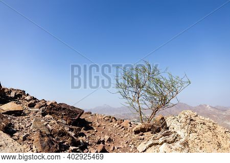 Hajar Mountains Landscape In Hatta, United Arab Emirates, Seen From A Hiking Trail, With Barren Acac