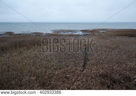 Autumn Withered Graautumn Withered Grass On The Shore Of A Pond, Panoramic Shot In Cloudy Weatherss