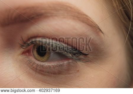 Macro Shot Of Womans Beautiful Eye With Eyelashes And Eyebrow.